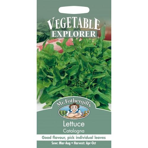 Seminte LACTUCA sativa-Lettuce-Catalogna - Salata verde, de foi, tip frunza de stejar