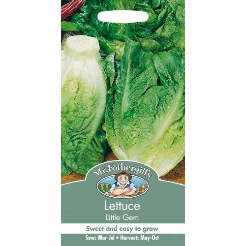 Seminte LACTUCA sativa-Lettuce-Little Gem - Salata semi Cos mica