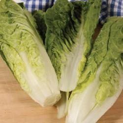 Seminte LACTUCA sativa Sweetheart - Salata tip Cos, lunguiata, cu mijloc galben