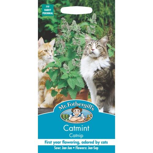 Seminte NEPETA cataria Catmint - Menta pisicii