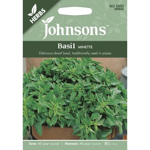 Seminte OCIMUM basilicum -Basil-Minette  - Busuioc de ghiveci cu frunza mica