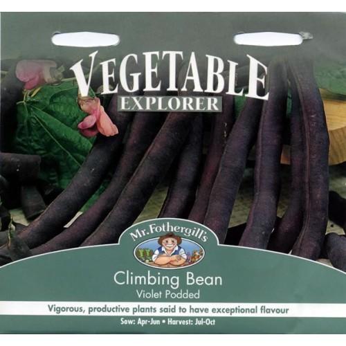 Seminte PHASEOLUS vulgaris-Clg Bean-Violet Podded-Fasole urcatoare cu teci mov