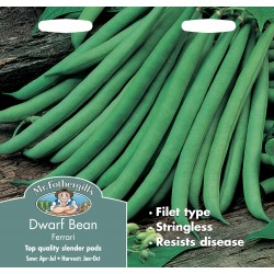 Seminte PHASEOLUS vulgaris-Dwarf- Ferrari - Fasole pitica cu pastai verzi