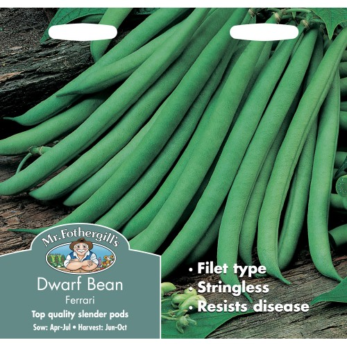 Seminte PHASEOLUS vulgaris-Dwarf Bean- Ferrari - Fasole pitica cu pastai verzi