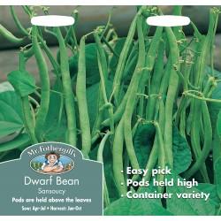 Seminte PHASEOLUS vulgaris-Dwarf- Sansoncy - Fasole pitica cu pastai verzi subtiri