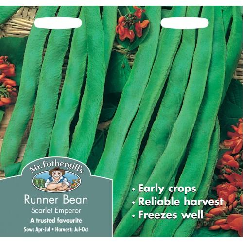 Seminte PHASEOLUS coccineus-Runner Bean-Scarlet Emperor - Fasole urcatoare