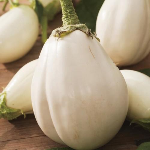 Seminte SOLANUM melongena-Aubergine-Clara F1 ORG-Vinete albe