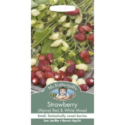 Seminte STRAWBERRY-Fragaria vesca-Alpine Red & White Mixed - Fragute