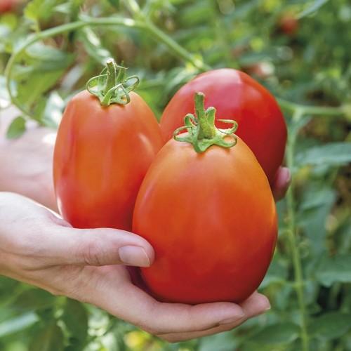 Seminte TOMATO Super Mama F1-Tomate forma de pruna