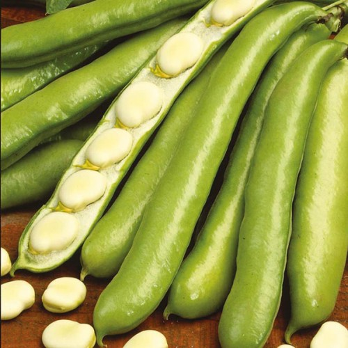 Seminte VICIA faba-Broad bean-De Monica-Bob timpuriu