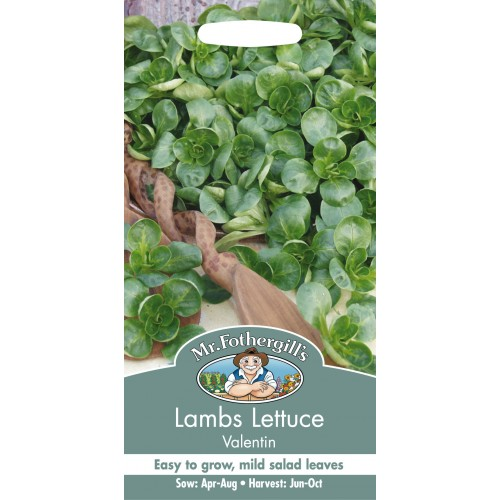Seminte VALERIANELLA locusta-Labs Lettuce-Valentin - Fetica
