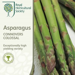 Seminte ASPARAGUS officinalis Connovers Colossal - Sparanghel