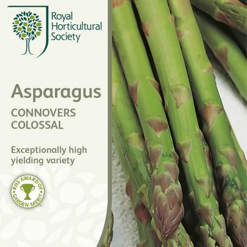 Seminte ASPARAGUS officinalis Connovers Colossal - Sparanghel