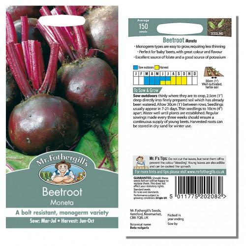 Seminte BETA vulgaris-Beetroot- Moneta-Sfecla de masa violet, soi monogerm