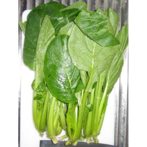 Seminte BRASSICA rapa var.perviridis Japanese Spinach Te-suto F1-Spanac japonez